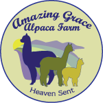 Amazing Grace alpacas